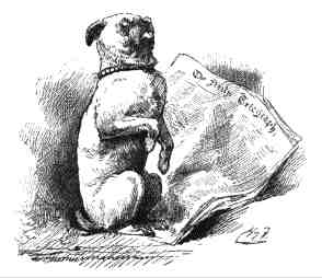 The pug-dog sat up