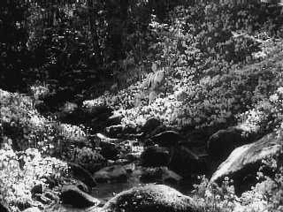 The Seven Samurai (resting)