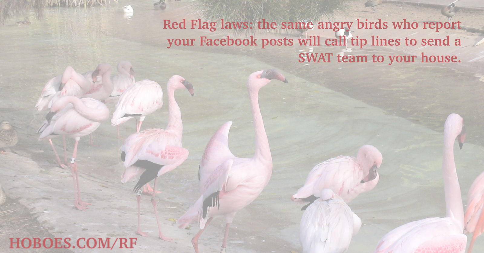 Red Flag Flamingos