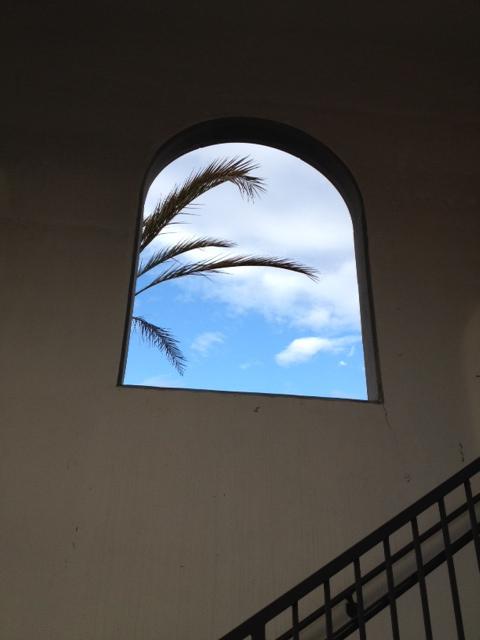 photo for San Diego Palms